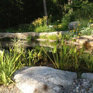 aquatic-plants-westchester-county-ny