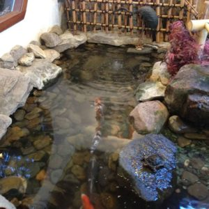 indoor-koi-pond-ulster-ny