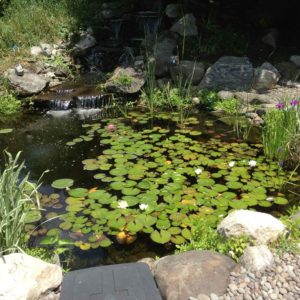 koi-pond-with-lillies-in-montgomery-ny