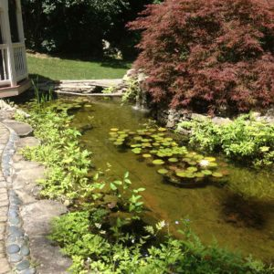 orange-county-ny-koi-ponds