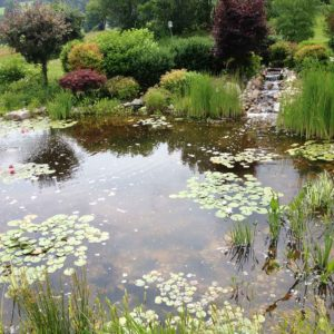 pond-builder-of-ulster-ny