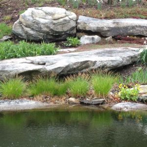 pond-grasses-of-new-york-ulster-county