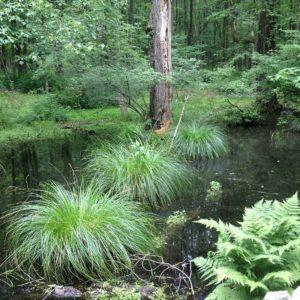 swamp-edges-westchester-county-ny