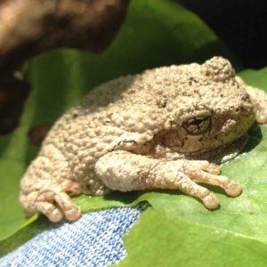 tree-frog-pleasant-valley-ny