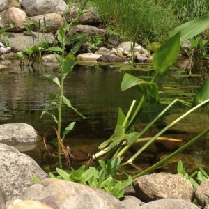 water-gardens-of-north-salem-ny