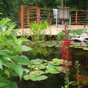 water-plants-of-westchester-county
