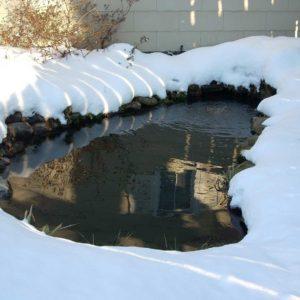 winterizing-koi-ponds-new-york