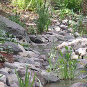 woodstock-koi-pond-installer-new-york